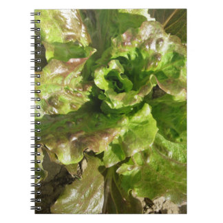 Fresh lettuce growing in the field. Tuscany, Italy Spiral Notebook