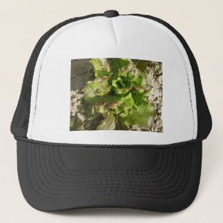 Fresh lettuce growing in the field. Tuscany, Italy Trucker Hat