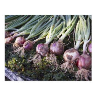 Fresh Onions, Domaine de l'Ardagnole, Postcard