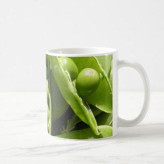 Fresh open green pea pods in sunlight coffee mugs