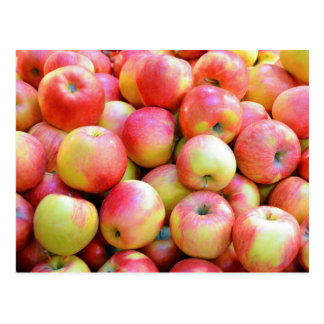 Fresh red and yellow apples postcard