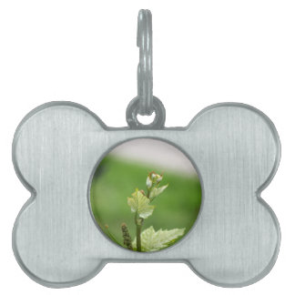 Fresh sprouts of grape vine pet tag