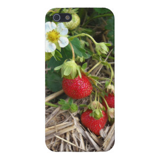Fresh Strawberries iphone case Cover For iPhone 5/5S