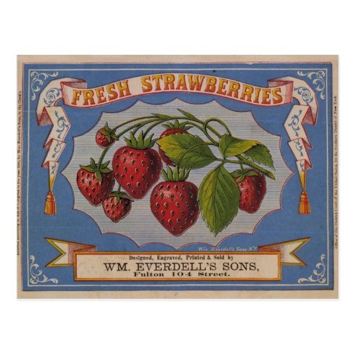 Fresh Strawberries Post Card