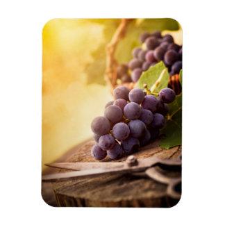 Freshly Harvested Grapes Rectangular Photo Magnet