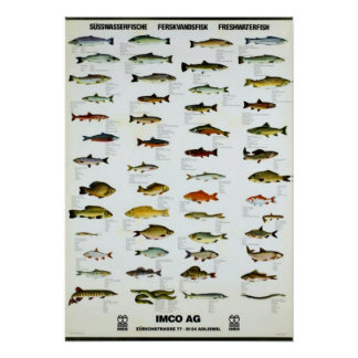 Freshwater Fish Vintage Repro. Print