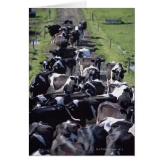 Fresian Dairy Cows, Awaiting Milking, Co Laois, Card