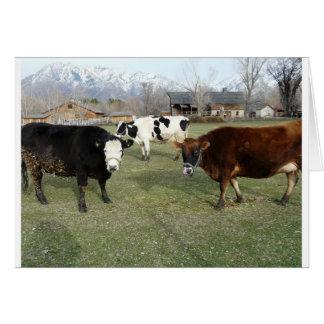 friendly cows greeting card