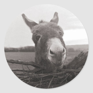 Friendly Donkey - Vintage Photo Round Sticker