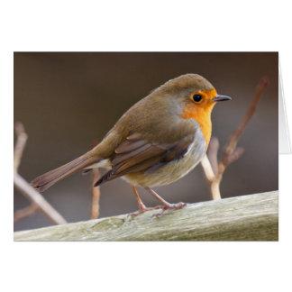 Friendly European Robin Card