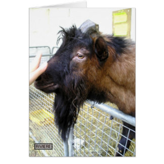 Friendly Goat Card