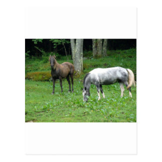 FRIENDLY HORSES POSTCARD