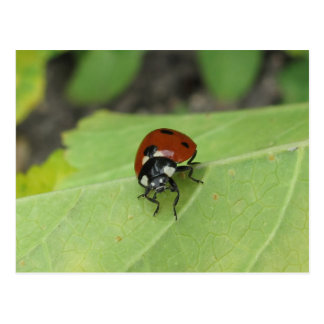 Friendly Ladybug Postcard