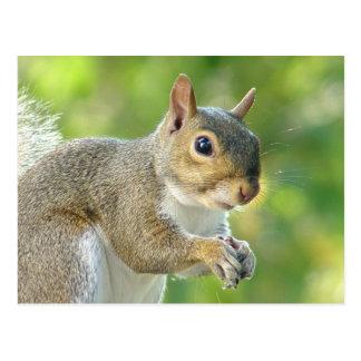 Friendly Little Squirrel Postcard
