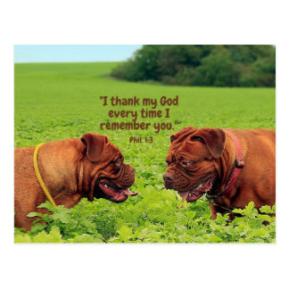 Friendly Pugs - Thinking of You Postcard