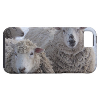 Friendly Sheep iPhone 5 Cover