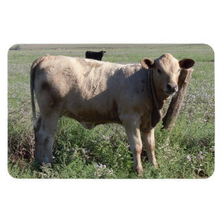 """Friendly Western Cow Cattle Cows 4"""" x 6"""" Rectangular Magnets"""