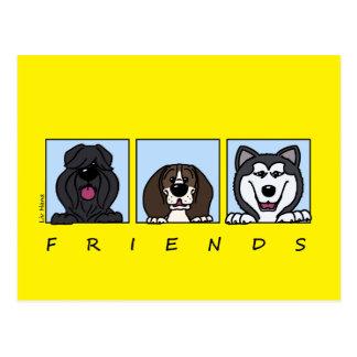 Friends: Bouvier, Beagle & Alaskan Malamute Postcard