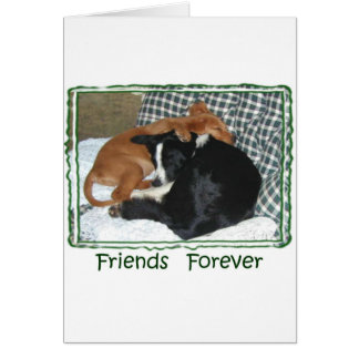 Friends Forever - Border Collie & Golden Retriever Greeting Card