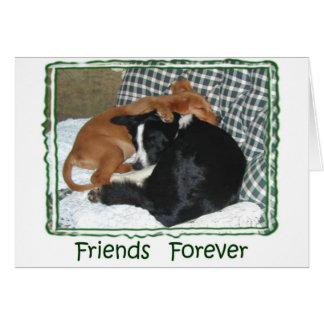 Friends Forever - Border Collie & Golden Retriever Greeting Card