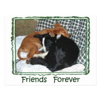 Friends Forever - Border Collie & Golden Retriever Postcard