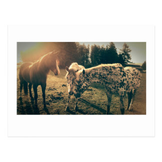 Friends on rural roadways postcard