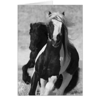 Friesian and Gypsy Run Horse Greeting Card