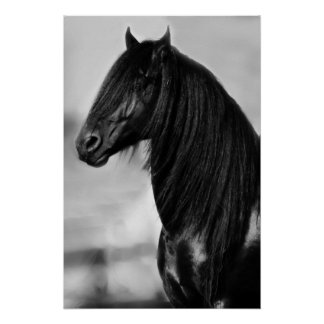 Friesian black stallion horse poster