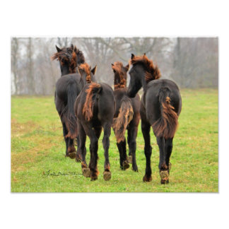Friesian Fire Feathering Photographic Print