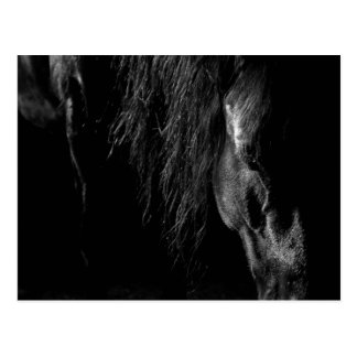 friesian horse a sleep postcard