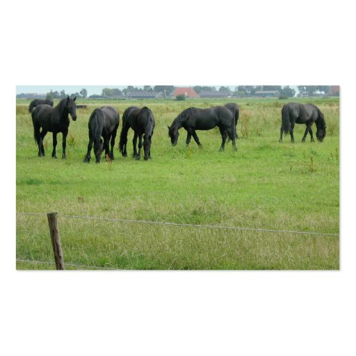 Friesian Horses in Green Meadow Small Photo Card Business Cards