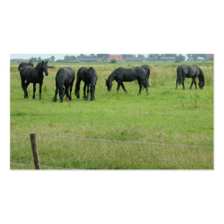 Friesian Horses in Green Meadow Small Photo Card Pack Of Standard Business Cards