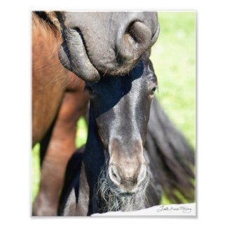 Friesian mare and Mintse foal Photograph