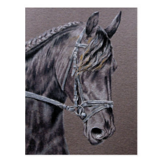 Friesian Postcard