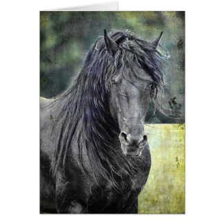 Friesian Stallion Card
