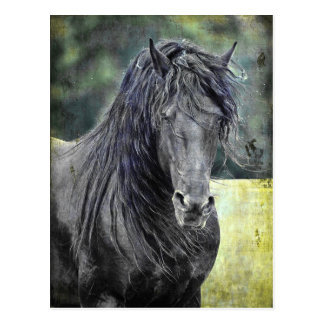 Friesian Stallion Postcard