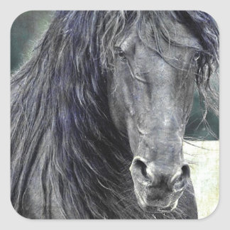 Friesian Stallion Square Sticker