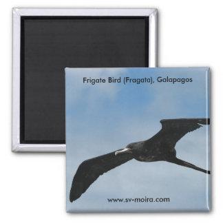 Frigate Bird (Fragata), Galapagos Islands 3 Square Magnet