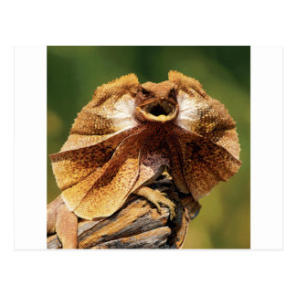 frilled lizard postcard