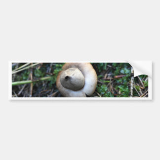 Fringed earthstar (Geastrum fimbriatum) Bumper Sticker
