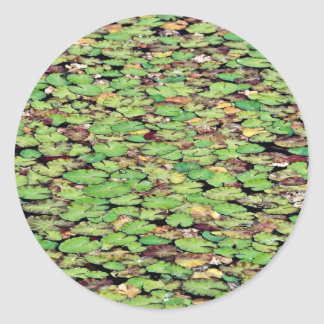 Fringed water lily  flowers stickers