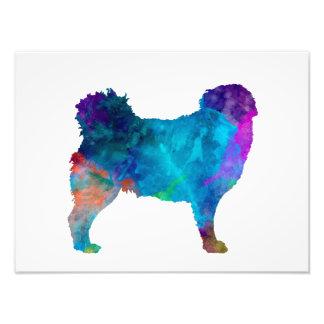 Frisian Water Dog in watercolor Photo