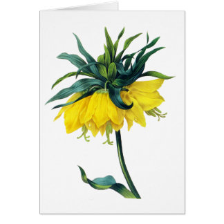 Fritillaire Imperiale ver Jaune By Pierre Joseph R Greeting Card