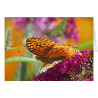 Fritillary Colors - Butterfly Card