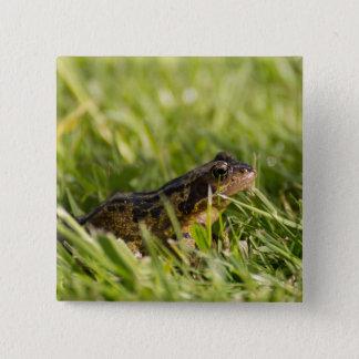 Frog 15 Cm Square Badge