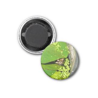 Frog 3 Cm Round Magnet