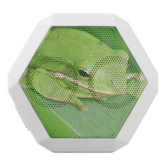 frog-64.jpg white boombot rex bluetooth speaker