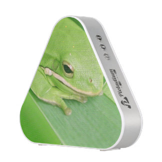 frog-64.jpg
