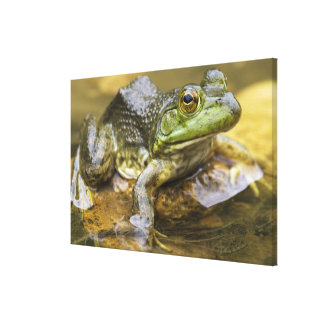 Frog along the Buffalo River, Mile 126 on the Canvas Prints