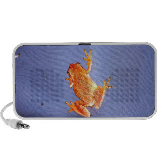 Frog and Fly Laptop Speakers